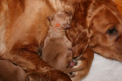 F-Wurf Geburt / Woche 1
